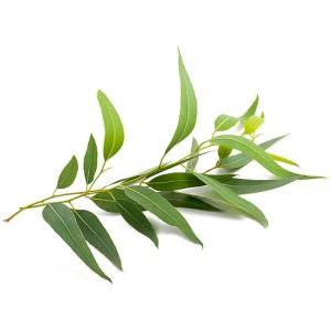 Naturalny olejek eteryczny Loyly Masters 50 ml - Eukaliptus