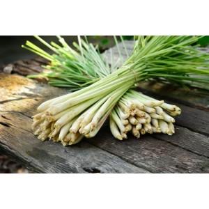 Naturalny olejek eteryczny Loyly Masters 50 ml - Trawa Cytrynowa
